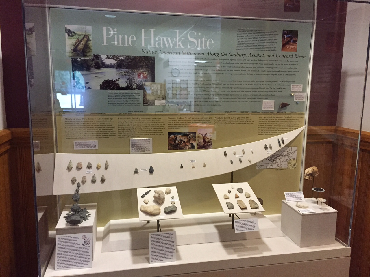 Pine Hawk display at the Acton Memorial Library